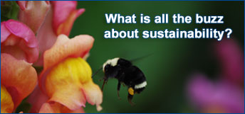 What is all the buzz about sustainability?